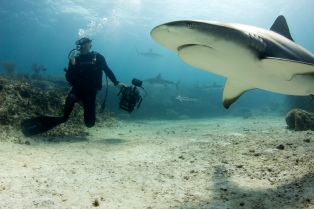 Palmyra Atoll: Tiger Shark and cameraman. Dr. M. Sanjayan dives deep into the oceans to find out how the animals that live here can help save the Oceans from total collapse. (Photo Credit: Christopher Crooks)