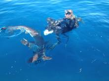 JARDINES DE LA REINA, CUBA- Fionn Crow Howieson on surface with camera and dive gear with Silky sharks swimming around him. (Photo credit: Shark Bay Films)