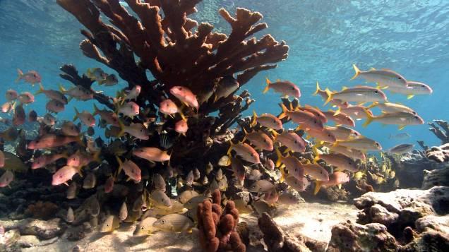 © Shark Bay Films_El arrecife secreto de Cuba9