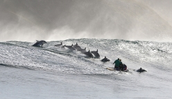 Making Of - a group of Bottlenose dolphins along the Wild Coast, South Africa. The film crew waited weeks to get right wave conditions and dolphins in the area, in order to shoot the surfing dolphin sequence.