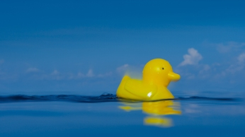 Picture shows: On the 10th January 1992, a container of plastic ducks, like this one, and other bath toys was accidentally released into the Pacific Ocean, recreated here. But this inadvertently led to breakthroughs in the understanding of the ocean's circulatory systems.