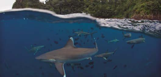 Guerreiros dos océanos