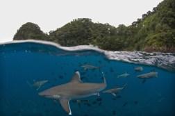 Guerreiros dos océanos 1