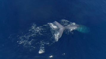 Mar a ultima fronteira_Azores I